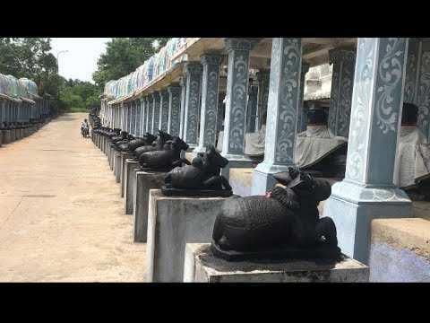 ஒரே கோவிலில் 1,008 சிவலிங்கம், ருட்ராக்ஷத்தால் ஆன தேர்... இன்னும் பல அதிசயம்