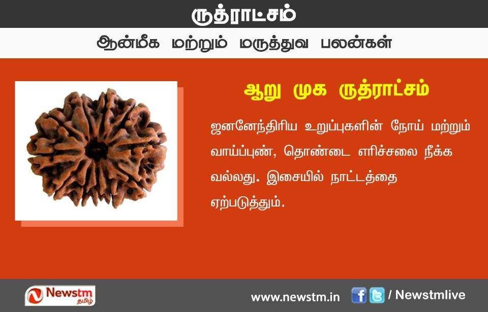 ருட்ராக்ஷத்தின் பலன்கள்: ஸ்பெஷல் ஆல்பம்