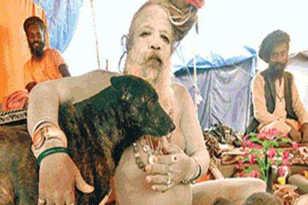 கும்பமேளாவில் நாய்களுக்கு ராஜ மரியாதை!