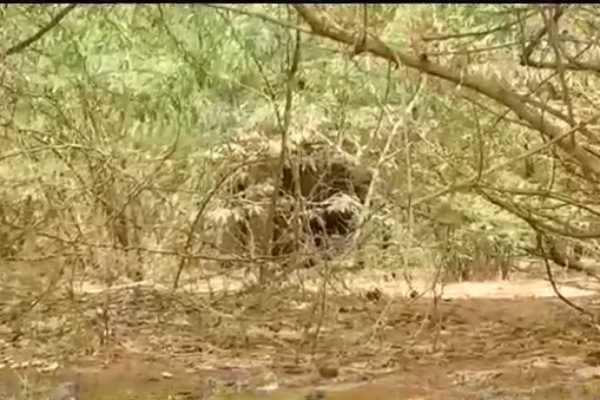 கோவை: காட்டு யானைக்குதண்ணீர், உணவு வழங்க வனத்துறை ஏற்பாடு