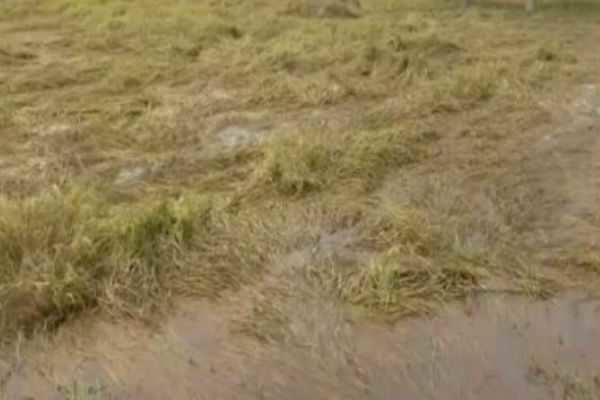 நாமக்கல்: காட்டாற்று வெள்ளத்தால் 500 ஏக்கர் பயிர்கள் சேதம்