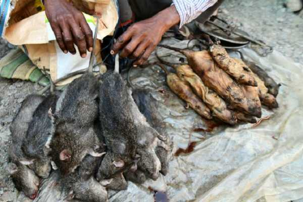 அசாம்- எலிக்கறி கிலோ 200 ரூபாய்